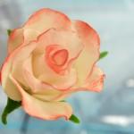 Permanent Link: Film: gör en ros i gum paste